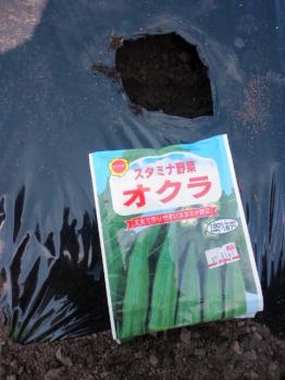 20120428おくら