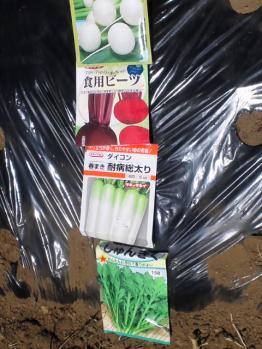 20120428春菊・春蒔き大根・ビーツ・サラダ蕪