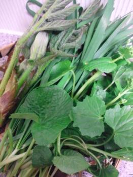 20120428山菜