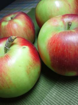 20120922紅玉葉摘み