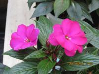 2012-9-7+008_convert_20120917145225.jpg