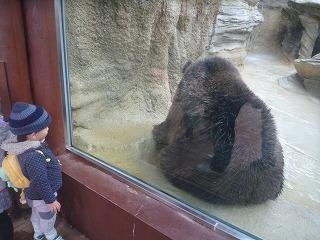 121118_動物園クマ (2)