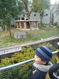 121118_動物園パンダ