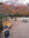 121118_動物園紅葉 (1)
