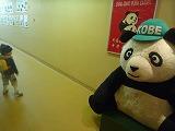 121118_動物園パンダ (4)