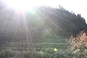 相川の稲わら干し3