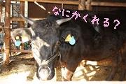 相川イノシシのお家6