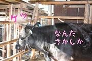 相川イノシシのお家7