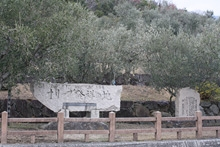 オリーブ園8
