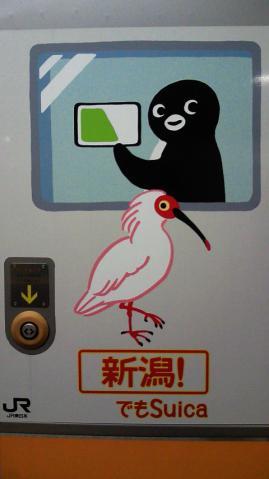 20130407-ペンギン中央線 (9)