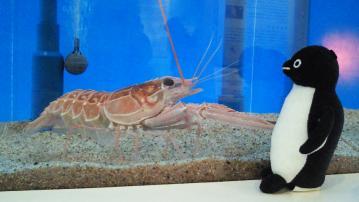 20130420-サンシャイン水族館の卵 (1)