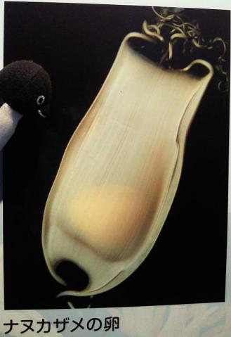 20130420-サンシャイン水族館の卵 (2)-加工
