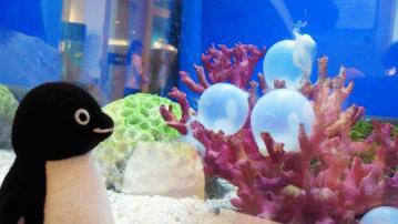 20130420-サンシャイン水族館の卵 (16)