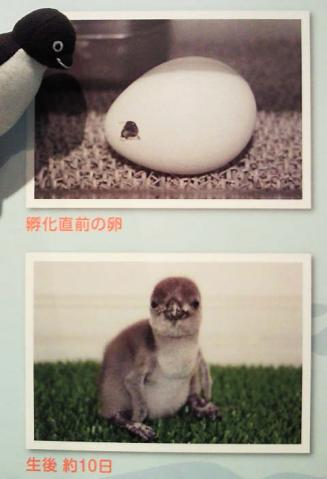 20130420-サンシャイン水族館の卵 (7)-加工