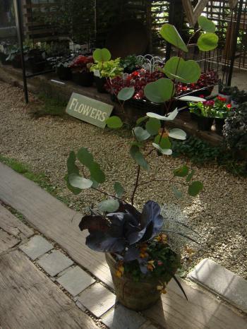 教室鉢植え1_convert_20121121140557