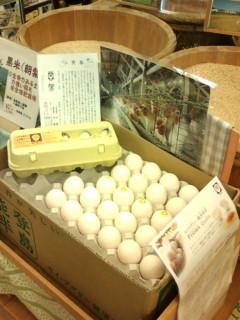 20130105セイアグリー健康卵