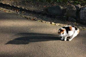 Sakura-chan The Cat and Her Double Shadow