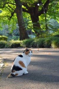 Sakura-chan The Cat In The Autumn Sunlight
