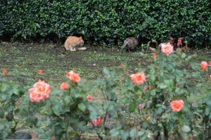 Rainy Day's Cats and Roses
