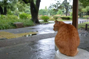 Rainy Day's Cat