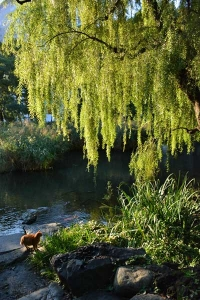 Park Cat and Autumn Willow Tree