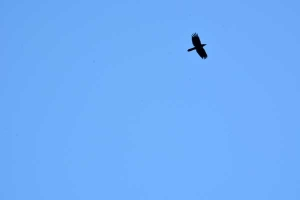 A Crow In The Blue Sky