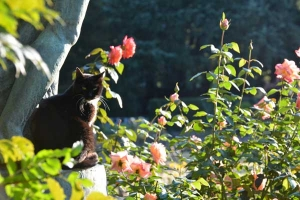 Park Cat and Roses