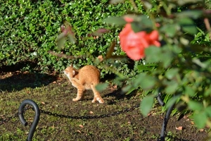 Park Cat and Lone Rose