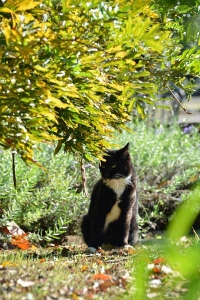 Cat and Autumn Wisteria Foliage