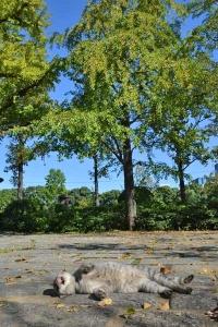 October Park Cat