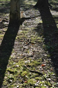 Sakura-chan The Cat and Tree Shadows