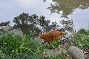 Cat By The Pond