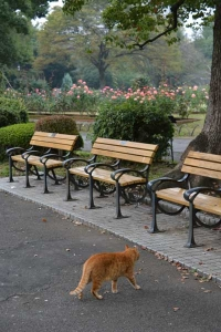 Cat and Benches