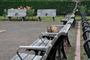 Cat, Benches and Roses