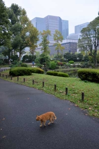 Tokyo Park Cat Crossing The Path