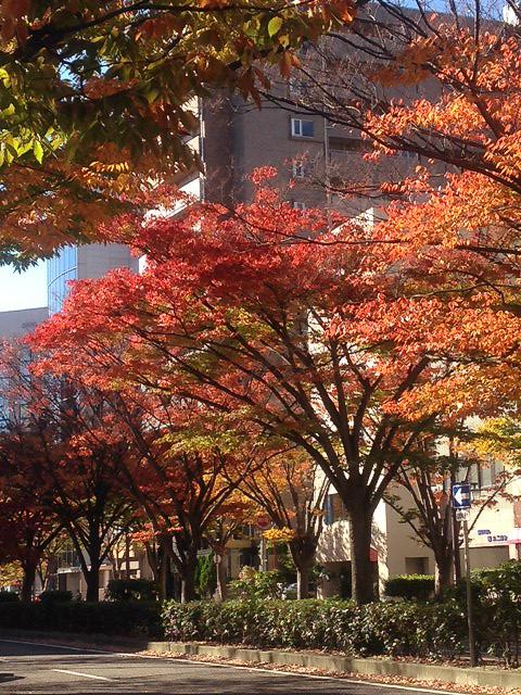 通勤路の紅葉
