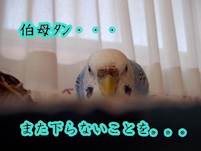 s-DSCN0199.jpg