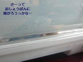 s-P1150727.jpg