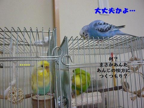 s-P1150839.jpg