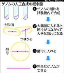 ゲノム人口合成