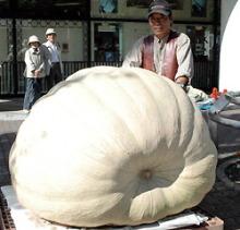 自分なりの判断のご紹介-巨大かぼちゃ