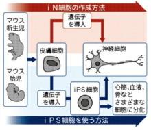 自分なりの判断のご紹介-iN細胞