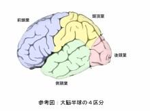 自分なりの判断のご紹介-大脳皮質