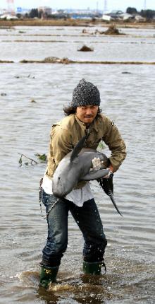 自分なりの判断のご紹介-震災イルカ救出