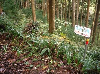 林道に出る8