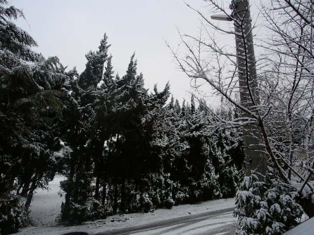 P1190054.jpg