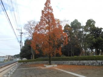 庄和町総合公園 (1)