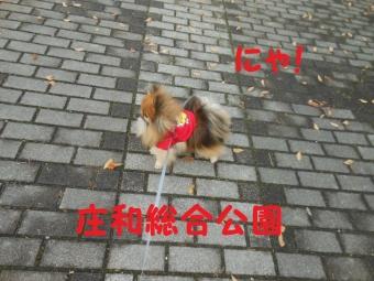 庄和町総合公園 (3)