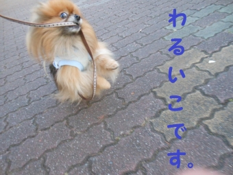 早稲田公園 011