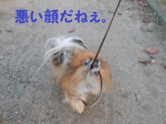 早稲田公園 015
